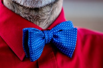 Blue and white polka dot circus bow tie